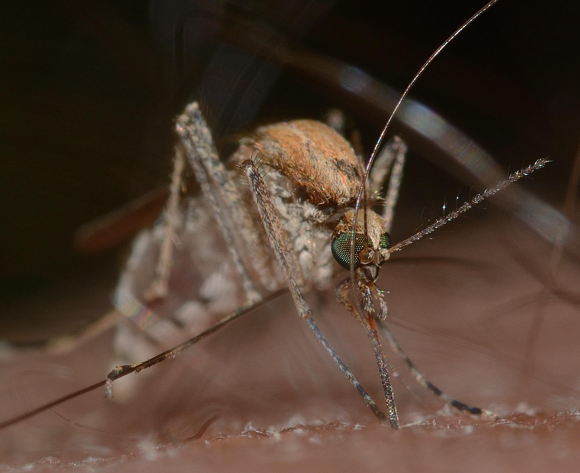 Repelent proti komárům