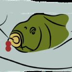 Lov kapra na boilies